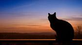 """""""I en katts øyne ser man tiden, ja, evigheten!"""" Charles Baudelaire"""