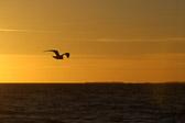 """""""Oppstigningen av en mann ligger i hans innsats, som flukten av en fugl er avhengig av dens vinger."""" M.T.O Shahmaghsoudi"""