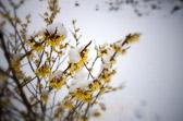 For se, nå er vinteren omme, regnet har dratt forbi, blomstene kommer til syne i landet, sangens tid er inne.