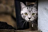 Nysgjerrigheten er et av de varigste og sikreste tegn på en levende intelligens. Samuel Johnson