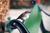 Fugl gir fugl hva fugl har. Finske ordtak