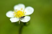 """""""Å leve er ikke nok. Solskinn, frihet og en liten blomst må man ha."""" H. C. Andersen"""