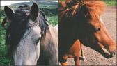 """""""Den som ikke kan ri to hester samtidig, bør ikke søke seg til sirkus - eller til politikken."""" James Callaghan"""