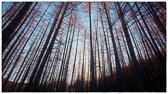 """""""Bruk de evner du har! Det ville bli svært stille i skogen hvis ingen andre sang enn de fuglene som synger best."""" Ukjent sitat"""