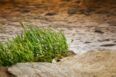 Gresset er grønt der hvor man er, hvis man bare husker å vanne det. Masja Charlotte Dessau