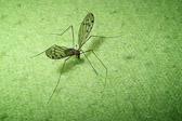 """""""Små bekymringer plager oss gjerne i ledige stunder - straks vi setter oss i bevegelse, forsvinner de som en mygg."""" Charles Horton Cooly"""